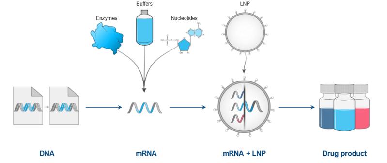 mRNA-Manyfacturing
